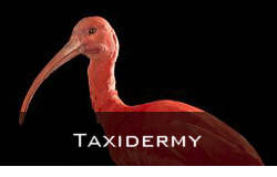 Taxidermy and Skulls