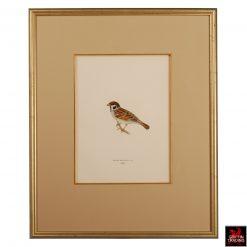 Collection of Chromolithograph Antique Bird Prints