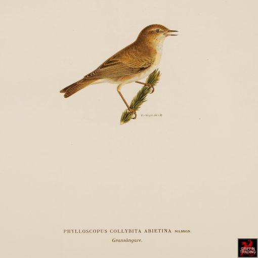 Collection of Antique Chromolithograph Bird Prints