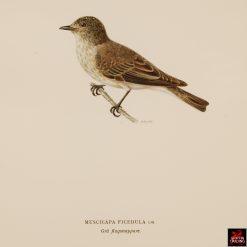Antique Chromolithograph Bird Prints
