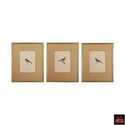 Set of 3 Chromolithograph antique bird prints.